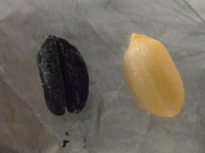 Peanut before and after combustion